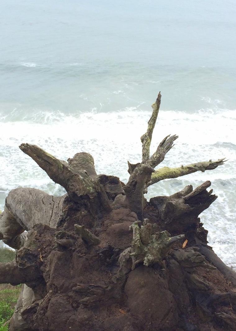 Seashore Santa Barbara