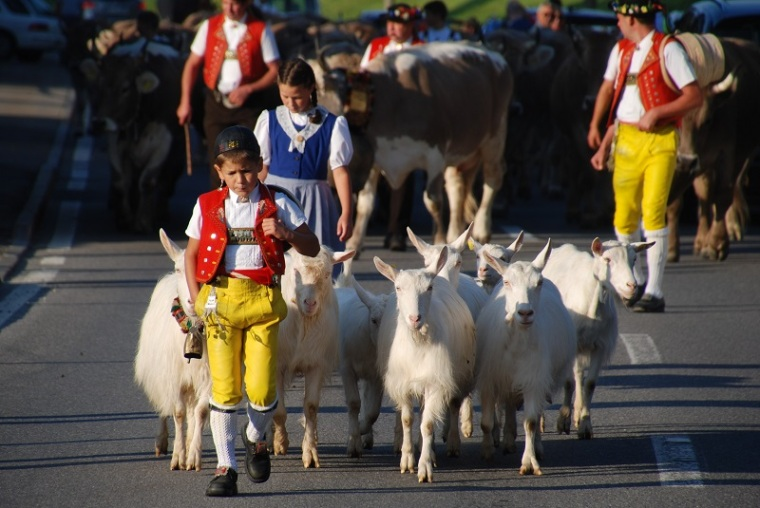 Goats and Appenzell boy